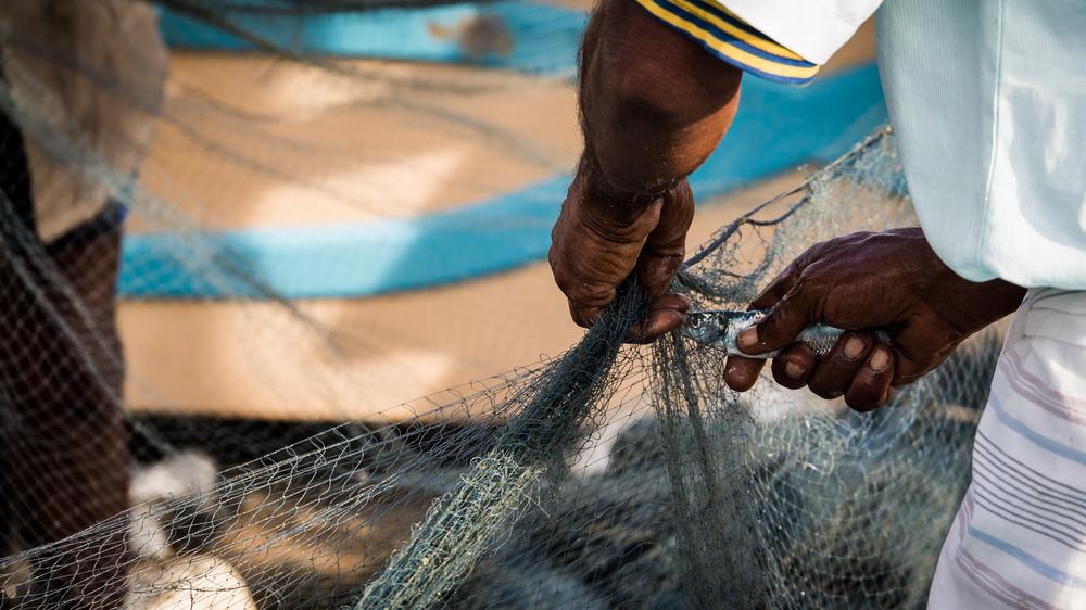 _5 Arugam Bay Fisherman Pulling fish out of net.jpg