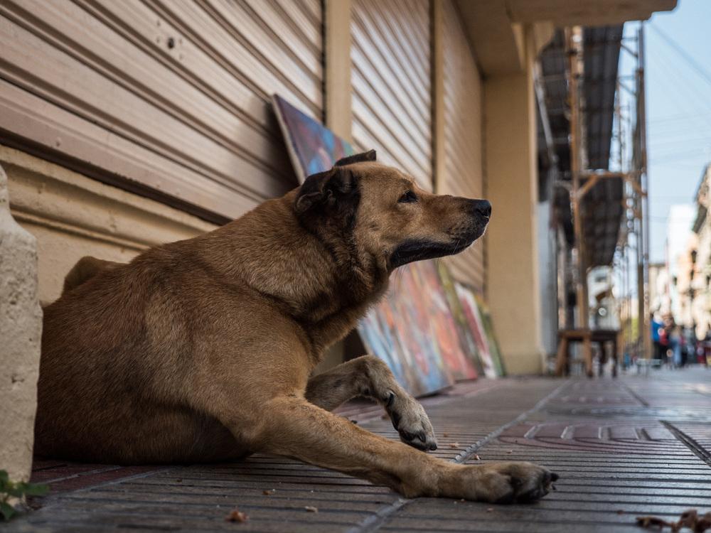 _36 Dog Scratching on the streets of Santo Doimingo.jpg