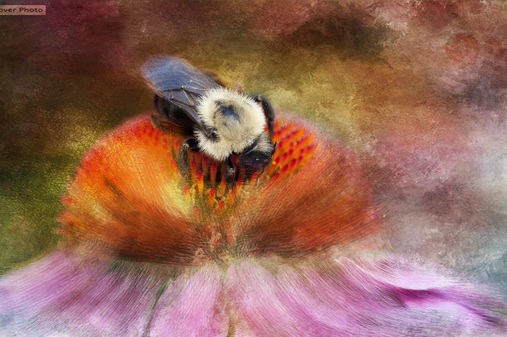 DSC_1630 painting web.jpg