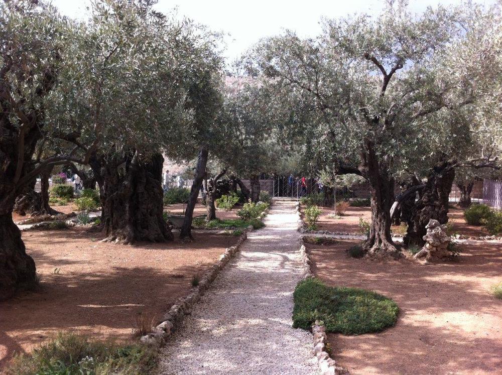 26Garden of Gethsemane.jpg