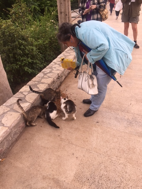 We continue to love our Greek guide Rea.  She's very knowledgeable & feeds the stray cats & dogs every chance she gets.