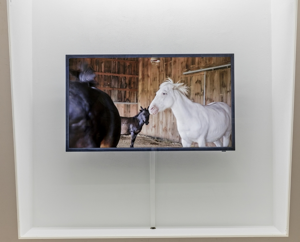 installation view at Gallery 44. Photo by Toni Hafkensheid