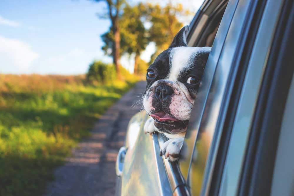 Take your dog on a battlefield tour in your car!