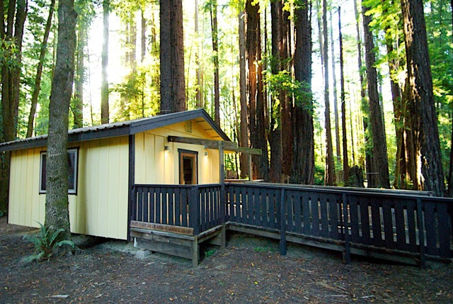 Redwood wedding venue in the forest