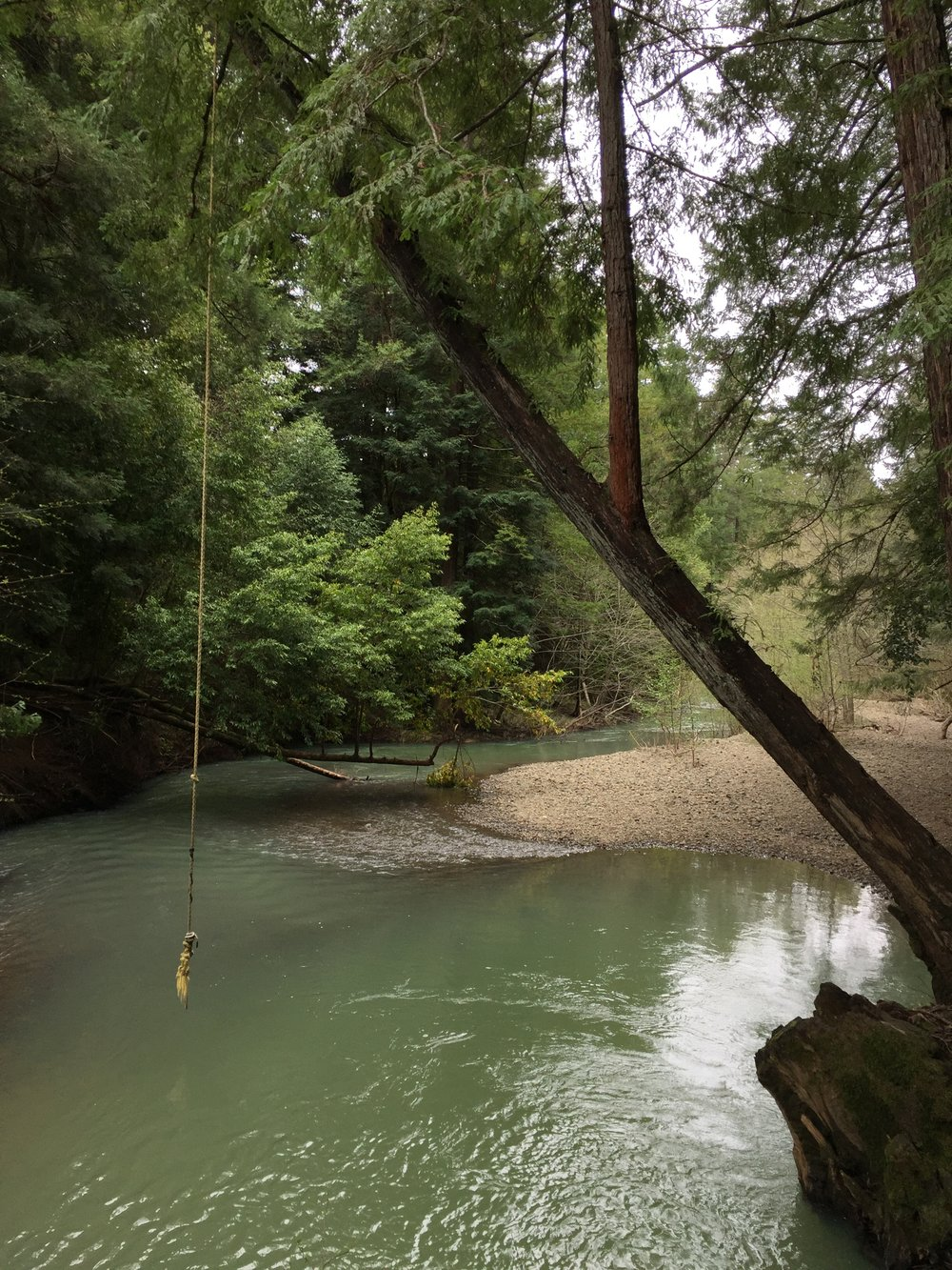 Camp Navarro_Rope Swing_Photo credit Dan Braun.JPG