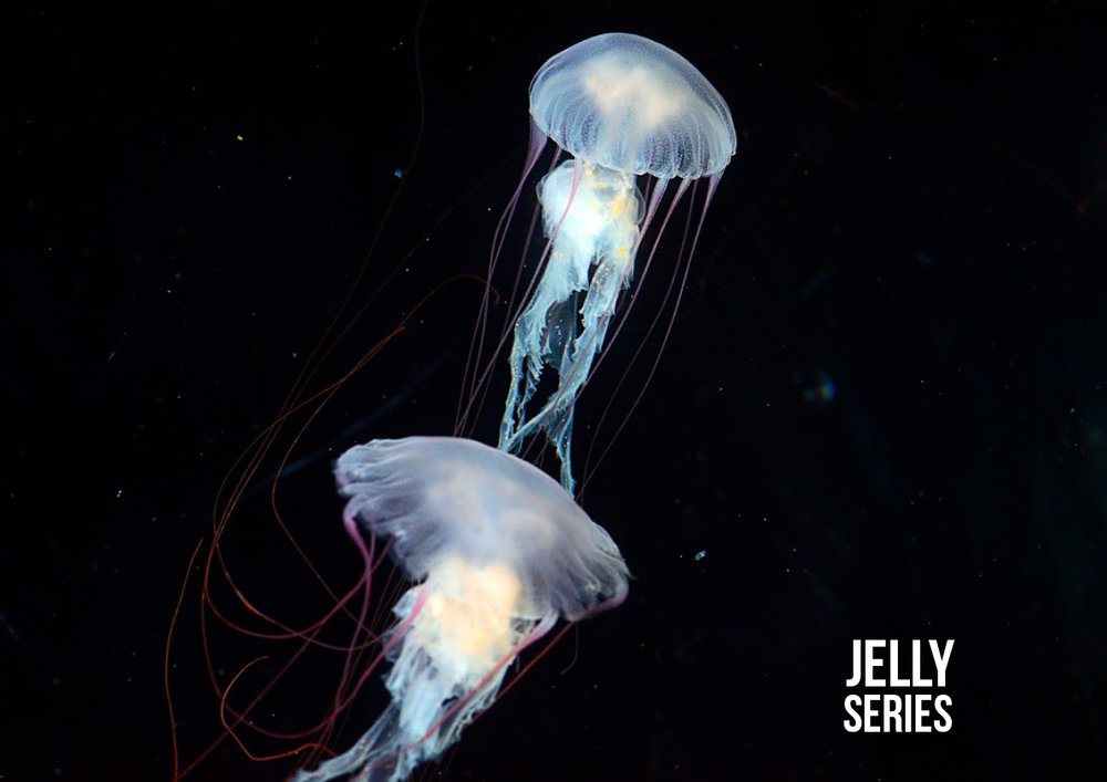 Jelly Series
