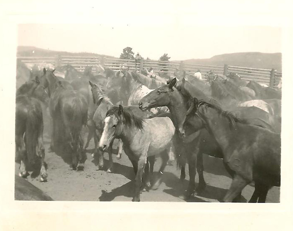 The foundation of the ranch first began with the running of wild horses.