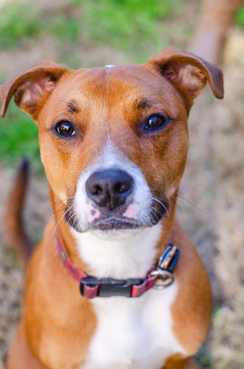 Dog Photo Shoot | Atlanta, GA