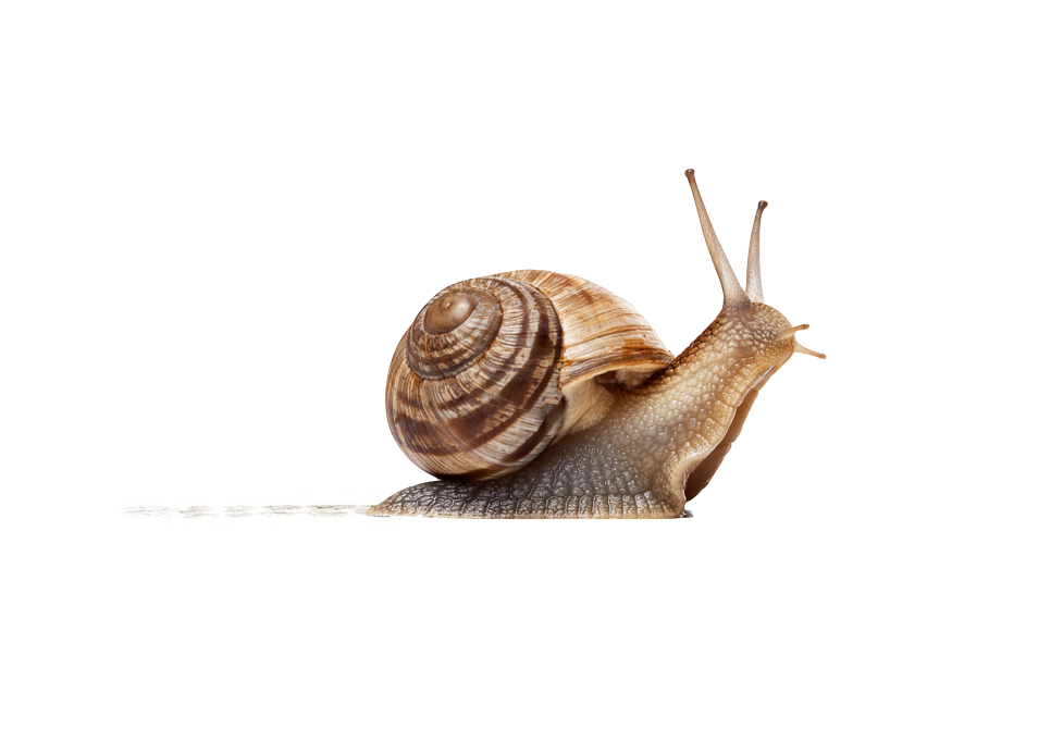 Fibroblasts are like snails leaving a slimy trail of collagen