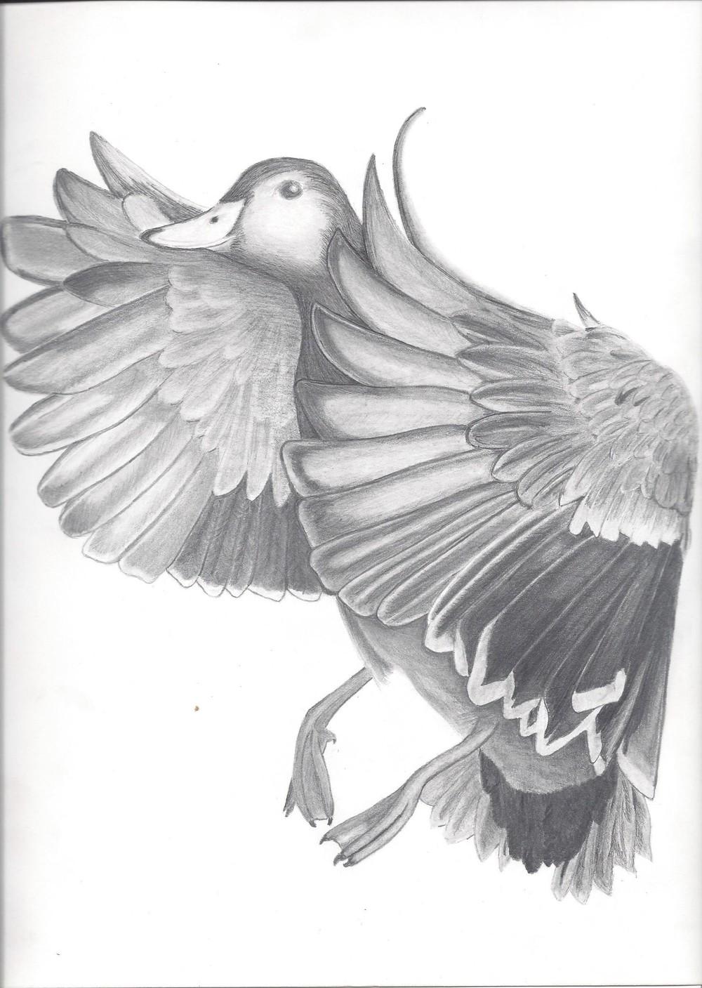 birdhunt.jpg