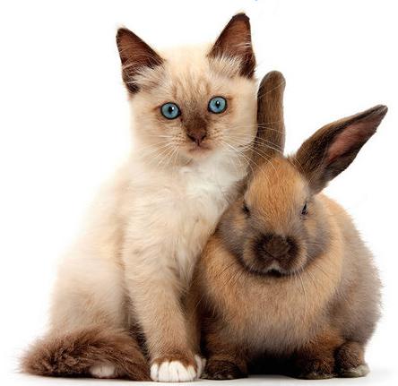 kitten and bunny JPEG.jpg