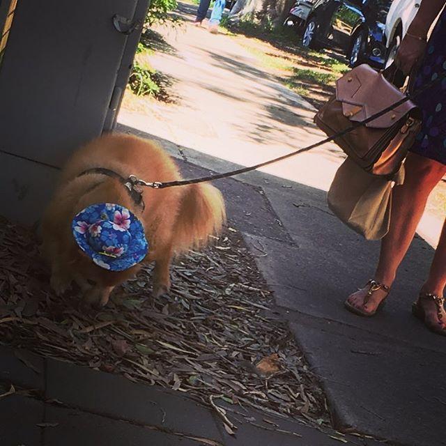 Yet another reason I love this place..😍 - - #dogsofinstagram #bondi #bondidogs