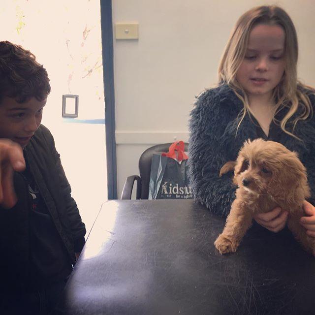 Kids n puppies... thick as thieves.🐶👑 #puppiesofinstagram #puppy #vet