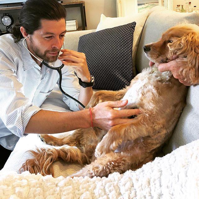 Little Brian having his checkup, sitting back on his couch like a king.  www.bondihousevet.com.au  #housecallvet #housecallveterinarian #bondihousevet #homevet #mobilevet #bondidogs #dogsofbondi