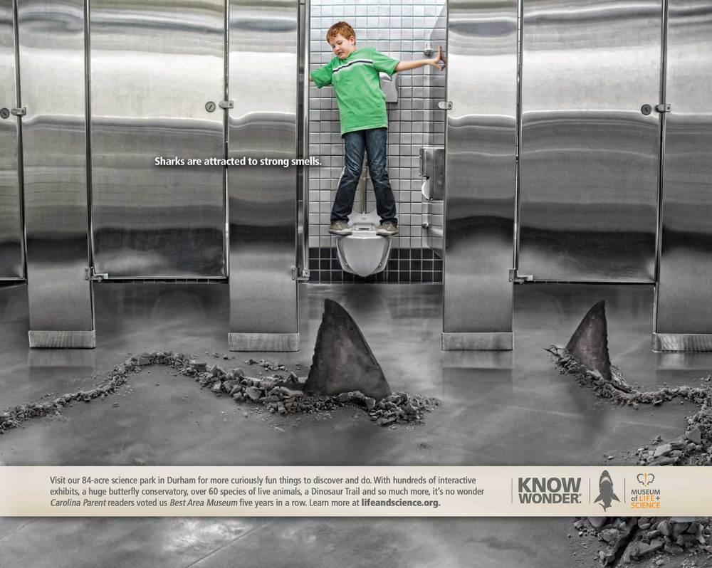 MUS.Shark.jpg