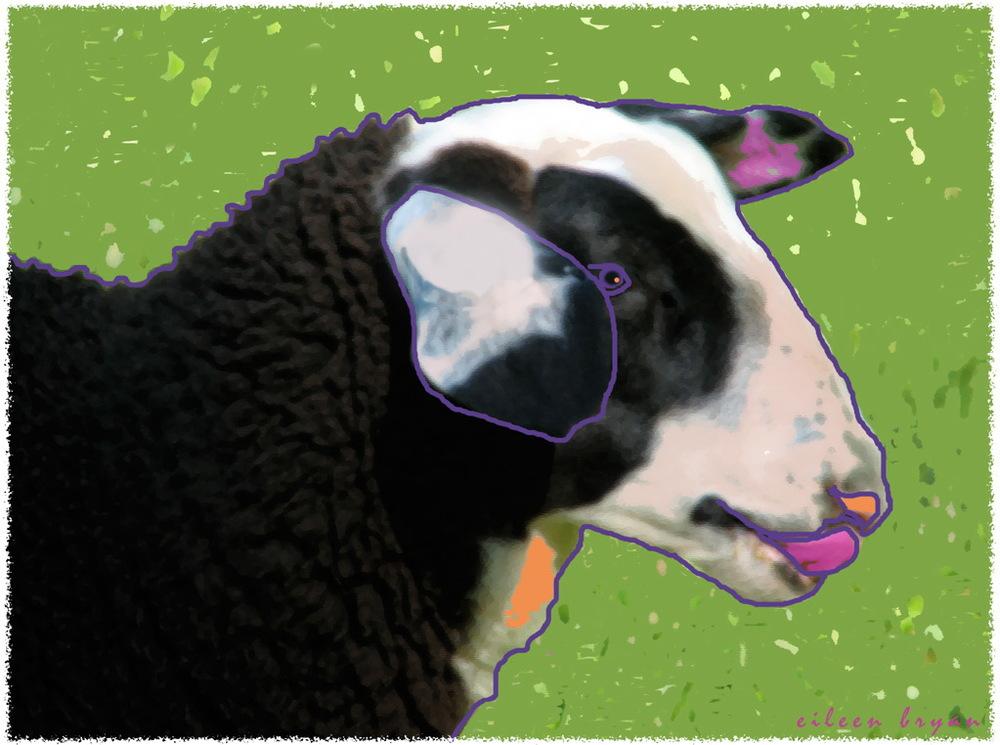 Sheep 0020.jpg