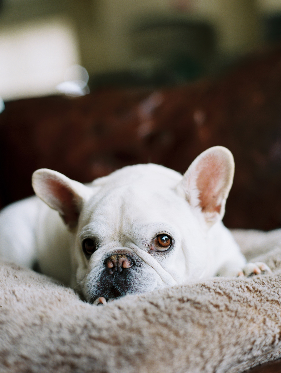 furbaby-family-dogs-cats-volkswagon-bug-victoria-oleary-photography-palos-verdes-10.jpg