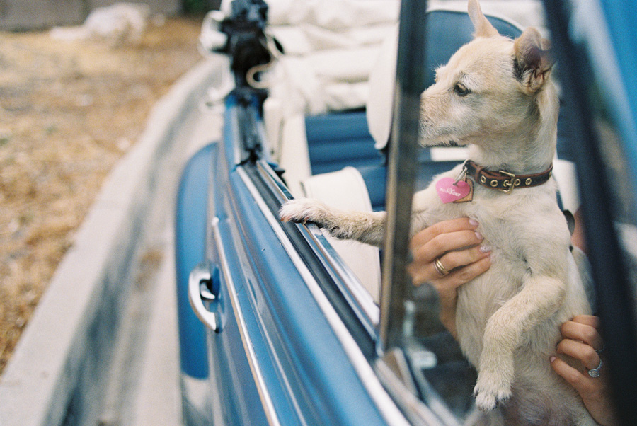 furbaby-family-dogs-cats-volkswagon-bug-victoria-oleary-photography-palos-verdes-15.jpg