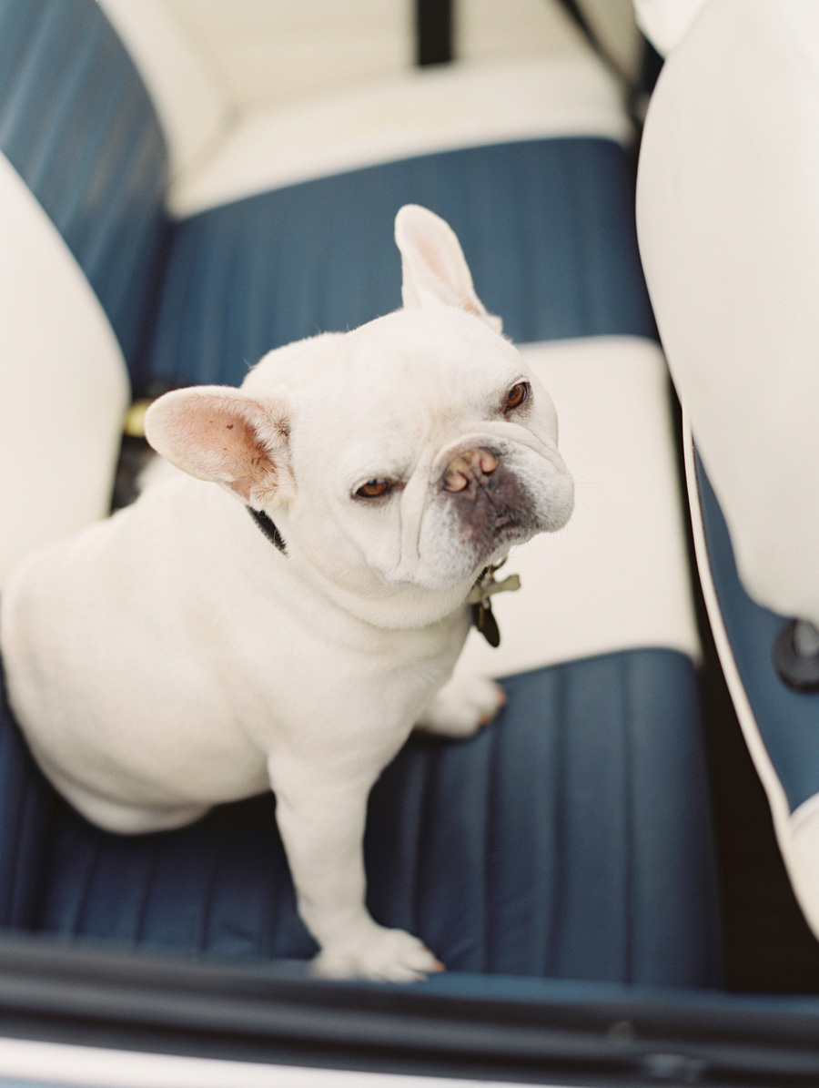 furbaby-family-dogs-cats-volkswagon-bug-victoria-oleary-photography-palos-verdes-16.jpg