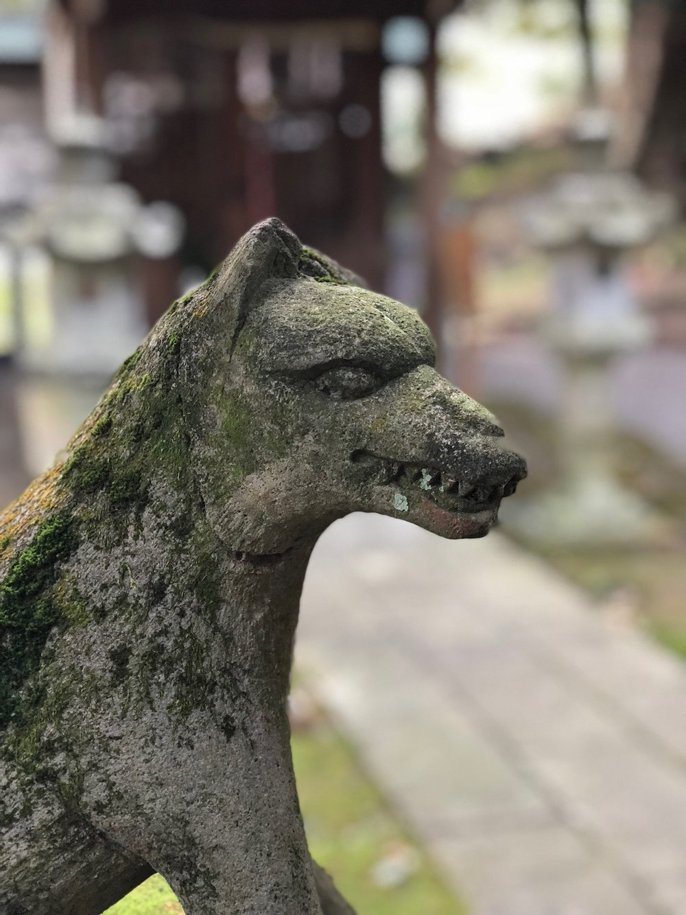"Kitsune, Japanese for ""fox,"" are found inside many shrines. They are often revered as protectors."