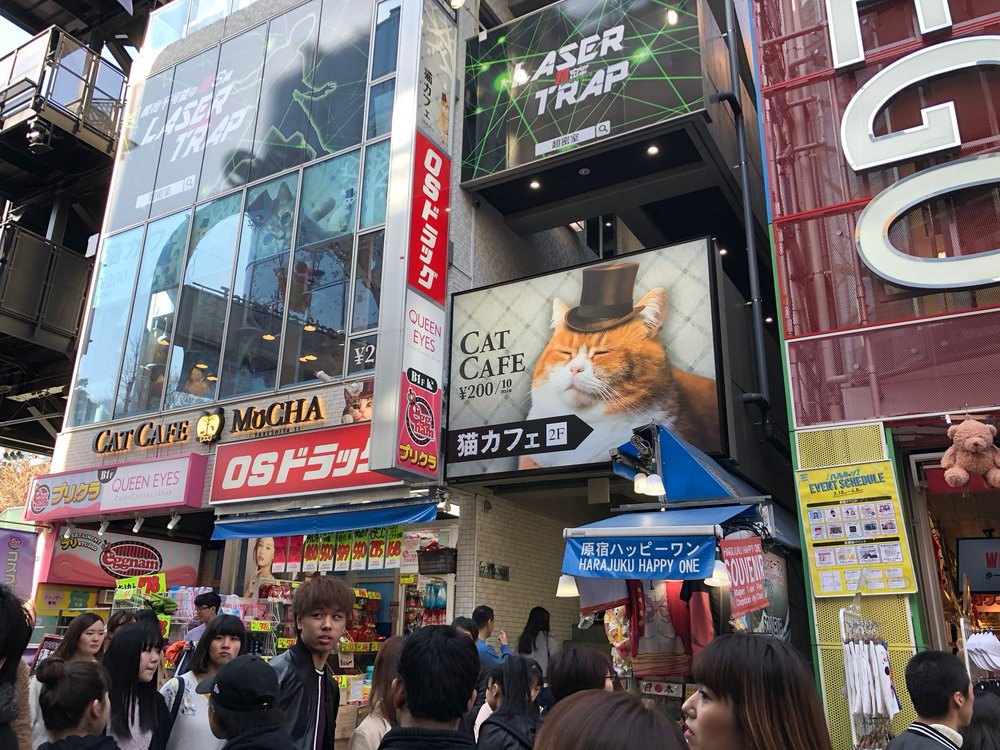 "On Takeshita Street we noticed the first of many ""Cat Cafes"" we would see - cafes where you can visit with a bunch of cats! There are also hedgehog, owl, and many other animal cafes throughout the city"