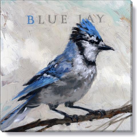 Blue Jay Canvas Art Print - Darren Gygi