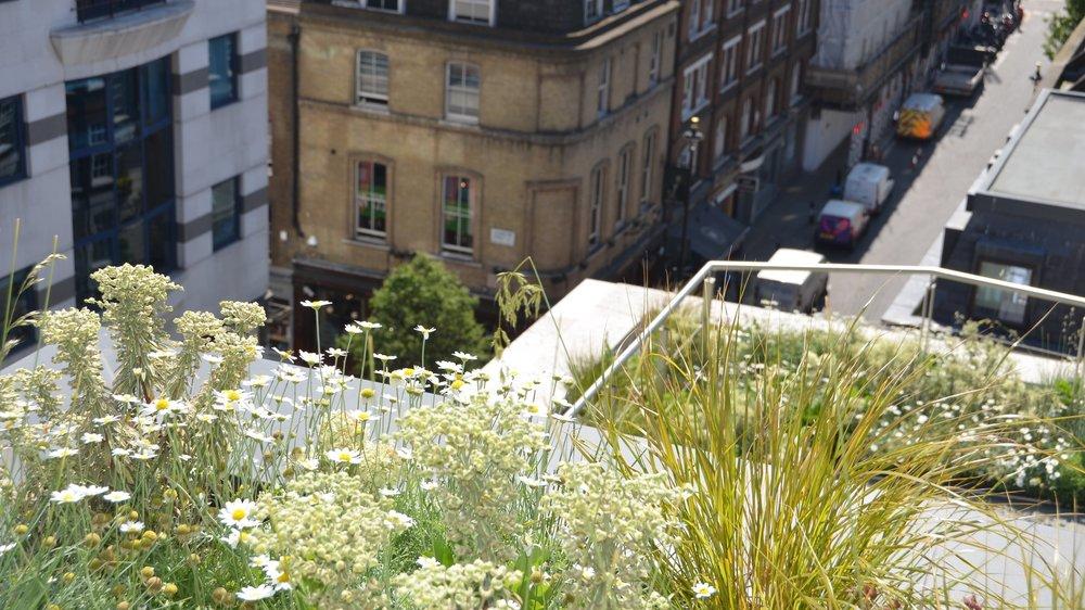 Broadwick Street -