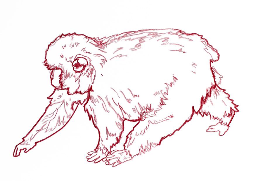 monkey3.2.jpg