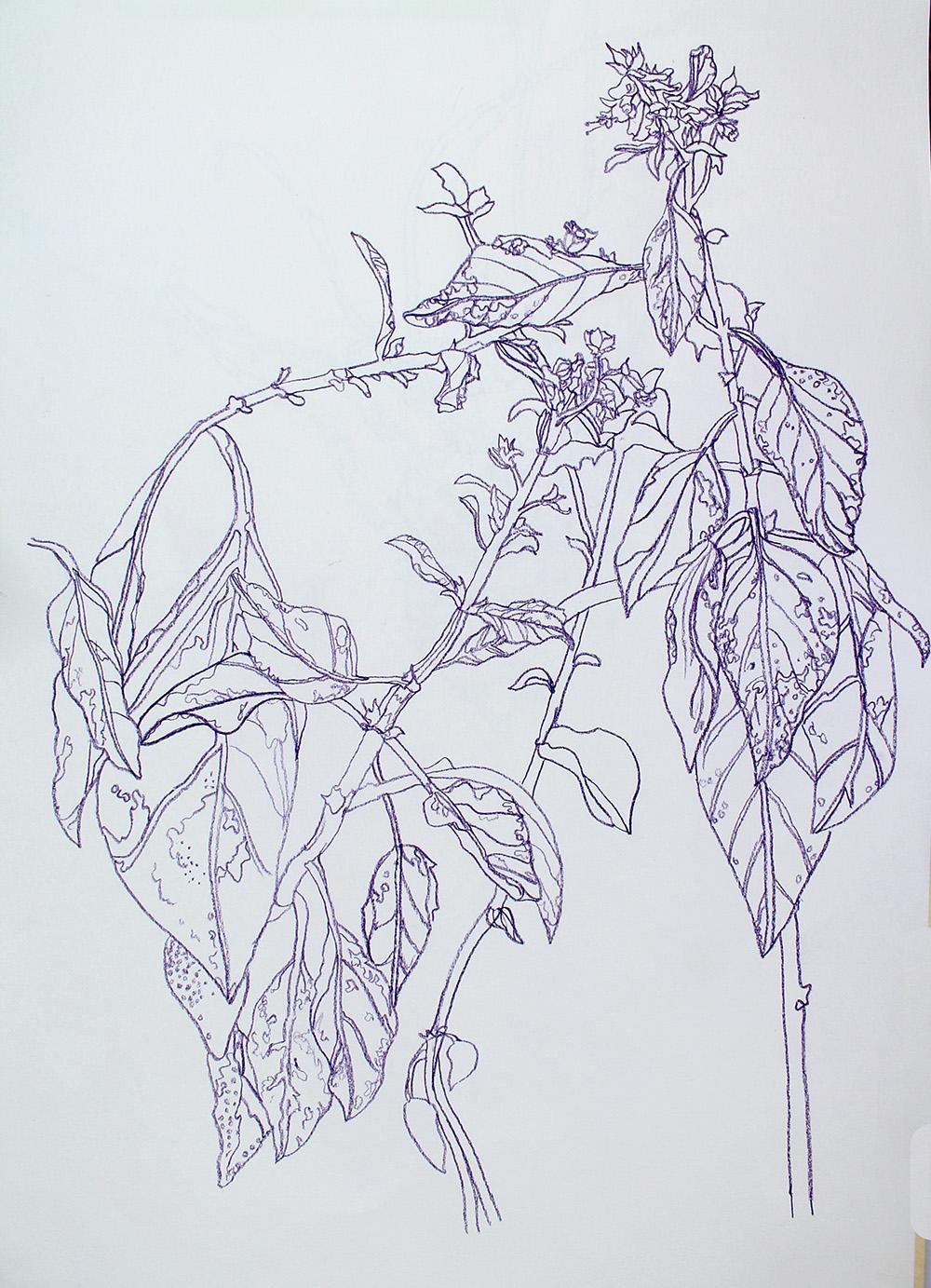 plantttt.jpg