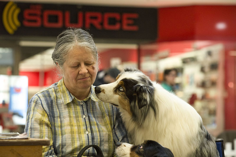 Puppy Love: Australian Shepard Blaze keeps an eye on his master, Joanne Johnson, Saturday March 14th, 2015, in the Sears Court of The Station Mall during the Sault Ste.Marie Kennel Club Meet the Breed Showcase.