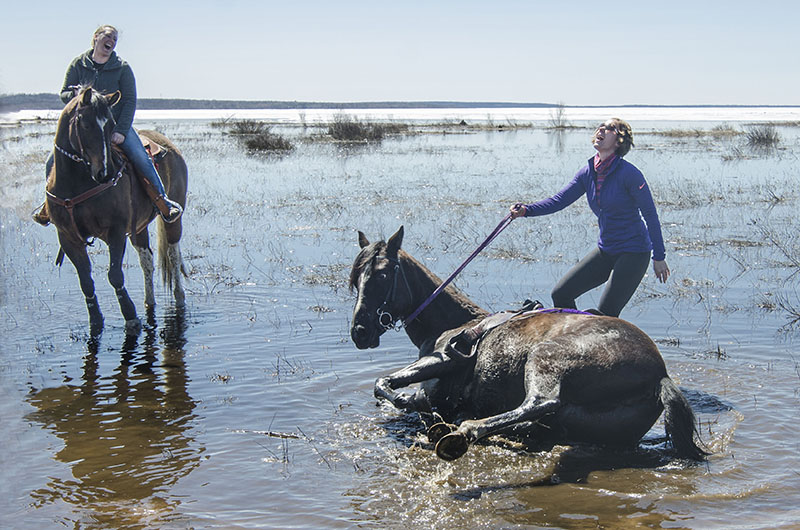 Quick Dip:  Blaze decided that Saturday's weather was so nice that while wading through the water with rider Terri Giciuk, she would take time to roll.  Riders gathered on the beach at Ojibwa Park on April 25th, 2015, waiting the commencement of the Ride for sight Poker Run.  Riders collect card along a predetermined trail ride, the rider with the best hand at the end of the ride is declared the winner .