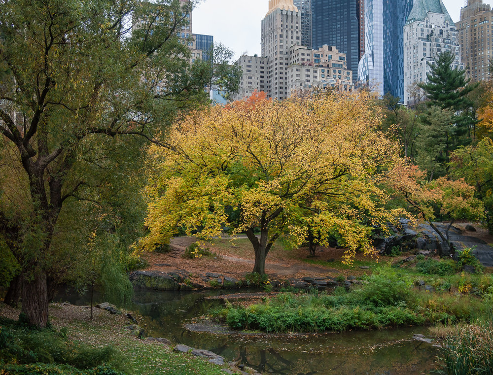 Central Park Lagoon, October 2015