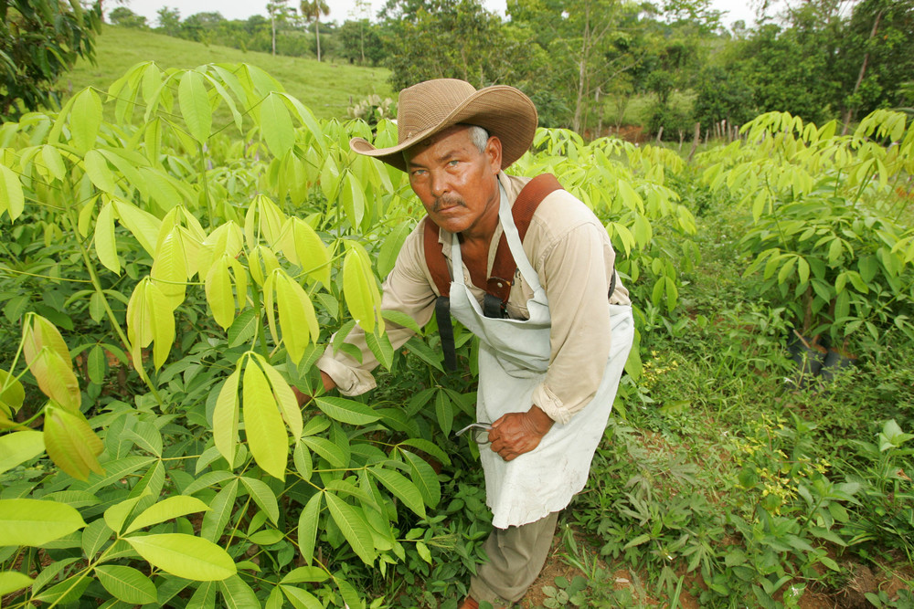 cacao man w plants.jpg