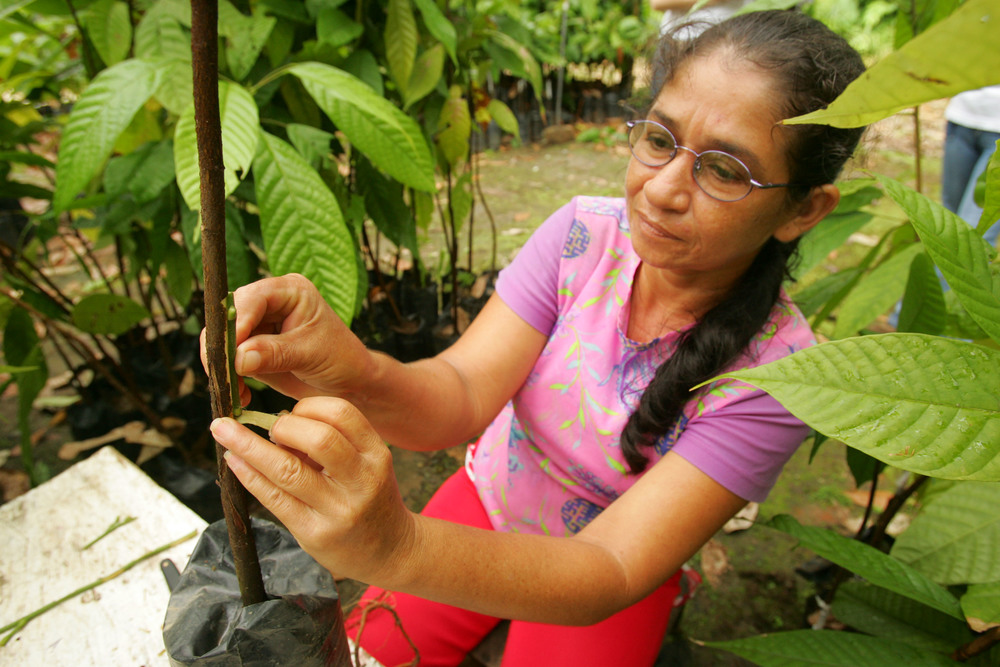 cacao plant lady.jpg