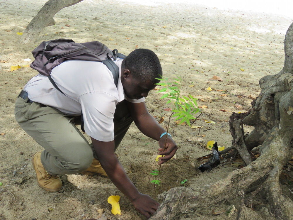 A member of the St. Vincent Forestry crew plants Neem trees on the beach to reduce coastal erosion.