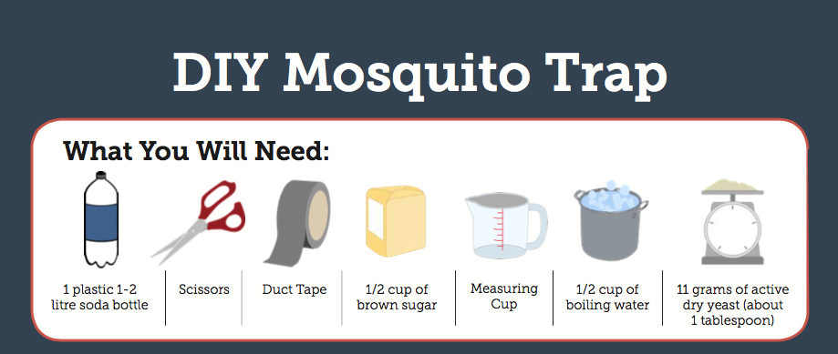 Diy Mosquito Trap Reduces Exposure To Chikungunya Pan American
