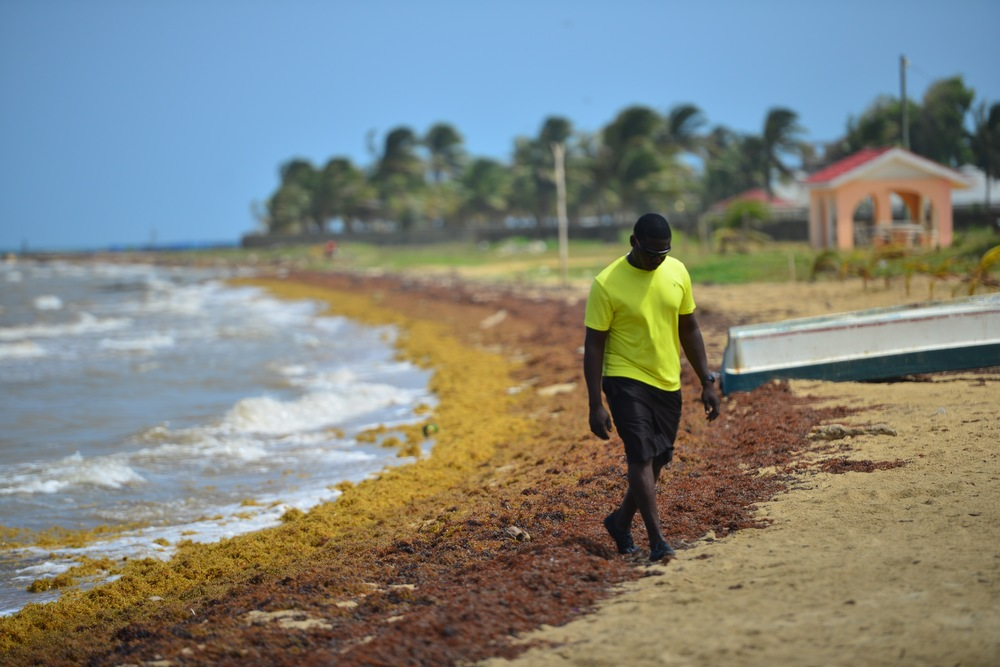 The Sargasso Sea is named after a floating seaweed called Sargassum.