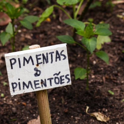Plant a school garden