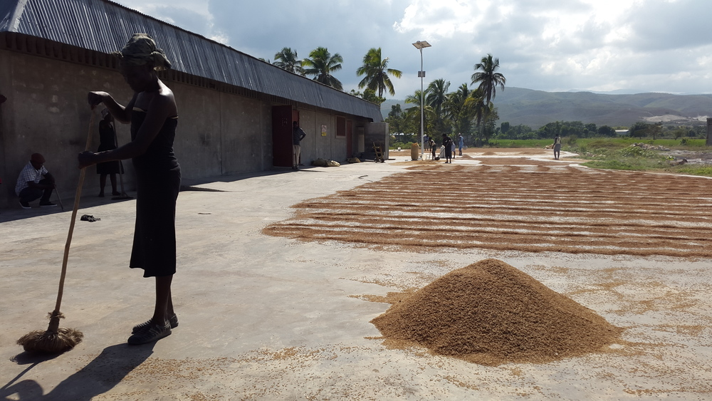 The Jumelle family owns a rice mill in Artibonite, a fertile region known as the rice basin of Haiti.
