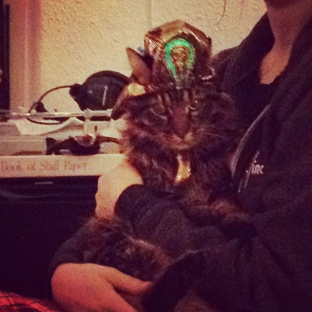 Zig as King Tutcatamun #happyhalloween #cats 🐯