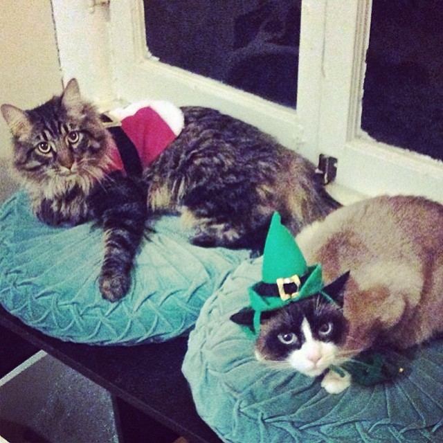 Meowy Christmas from Sigmund Claws and his little helper, Frida the Fuzzy Elf! 🐯🐼🎅🎄🐾