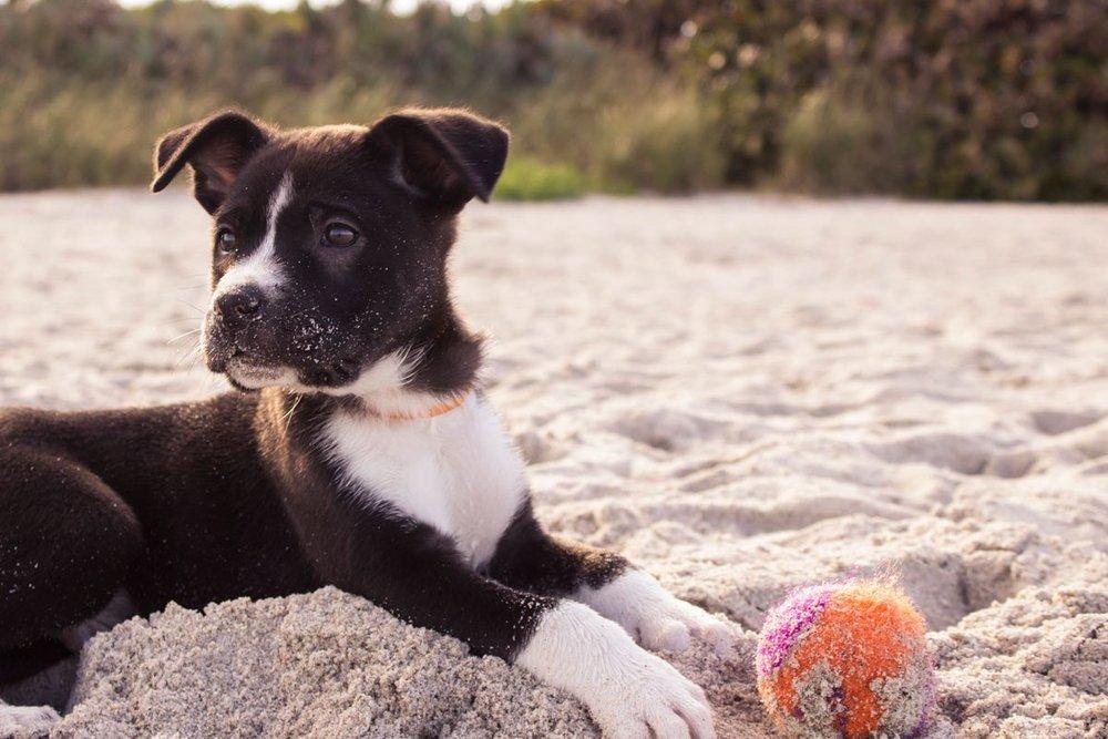 puppy-on-the-beach.jpg