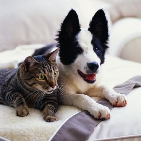 Dog_and_Cat-291x300.jpg