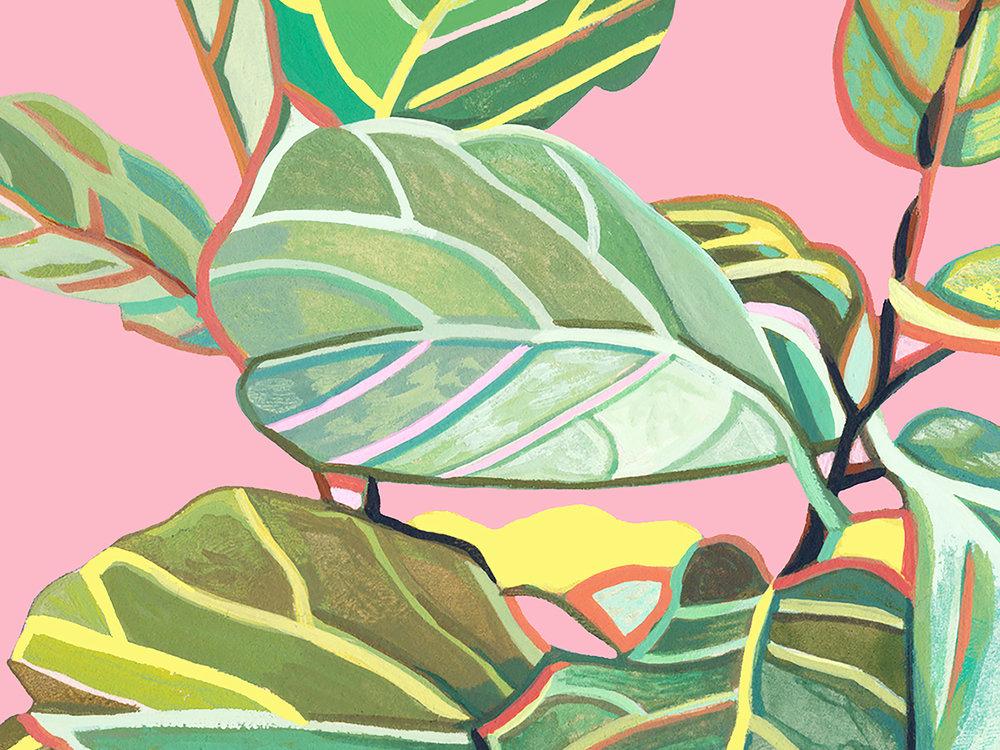 WEB PINK PLANT.jpg