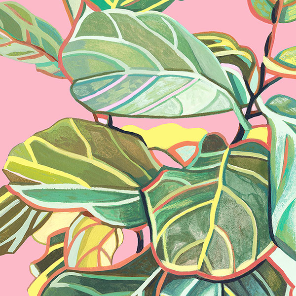 Detail of fig tree in a commissioned cat + plant portrait!