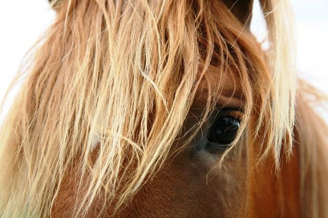 horses life coaching
