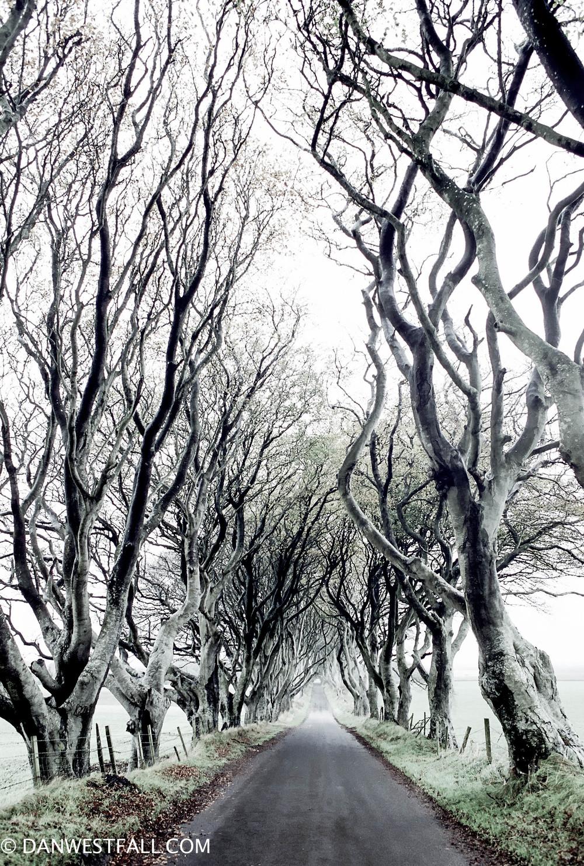 N. Ireland. Color Dark Hedges. #0293