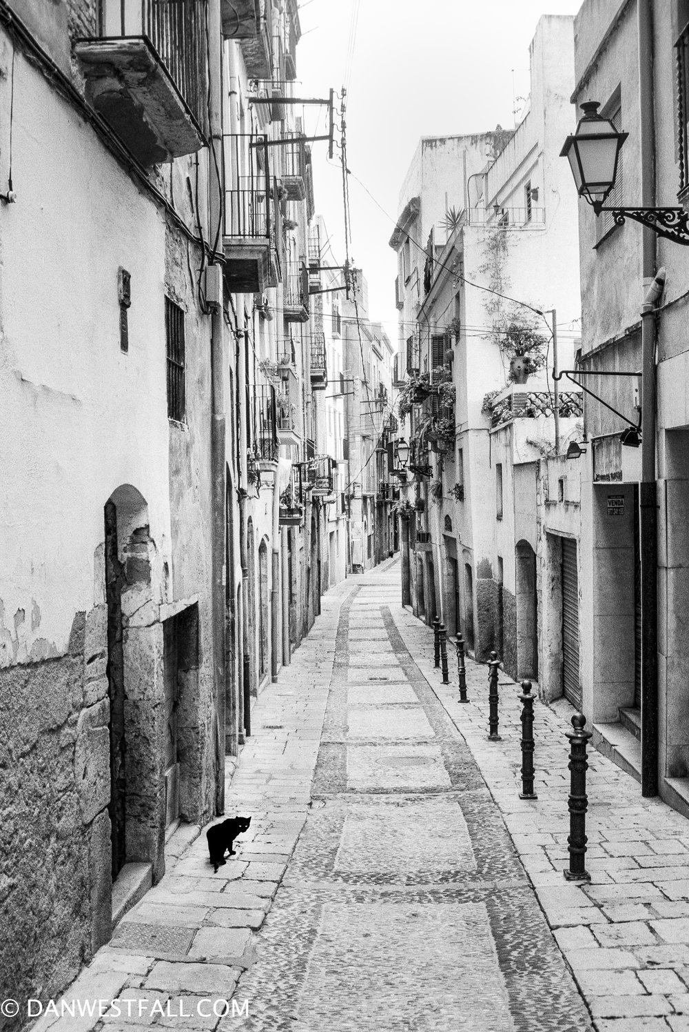 Alley Cat. Tarragona, Spain. #.702
