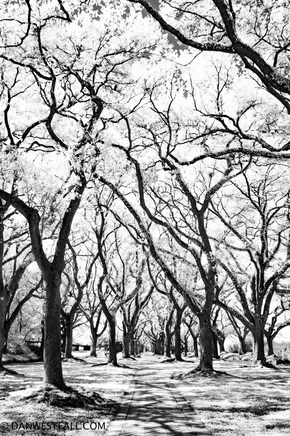 Boulevard Oaks infrared. Houston. #.696