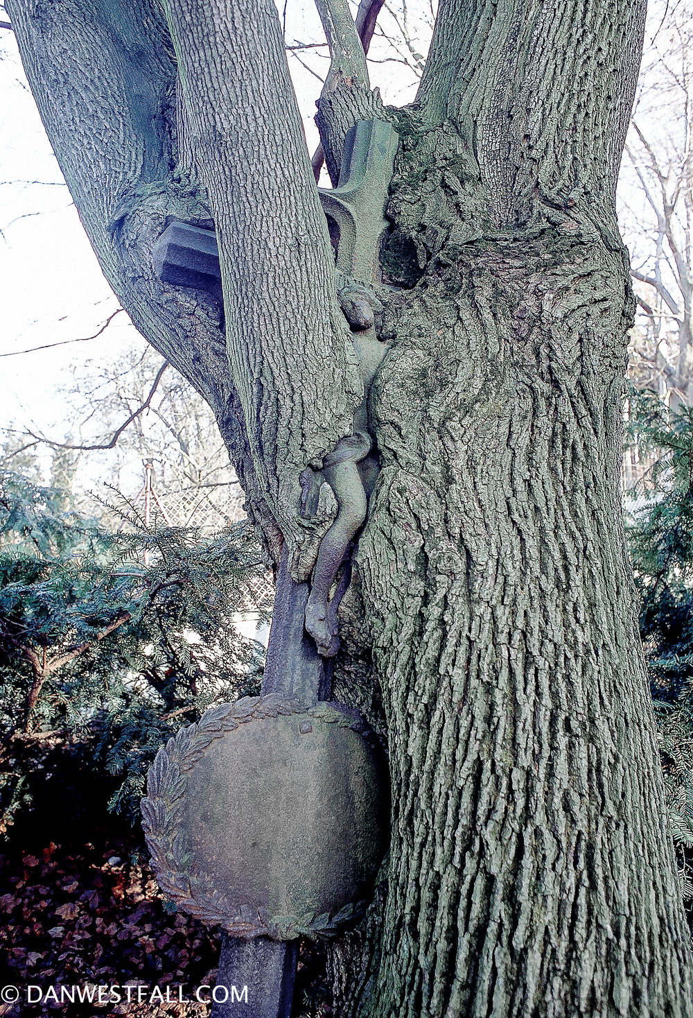 Overgrown Headstone. Prague. #.348